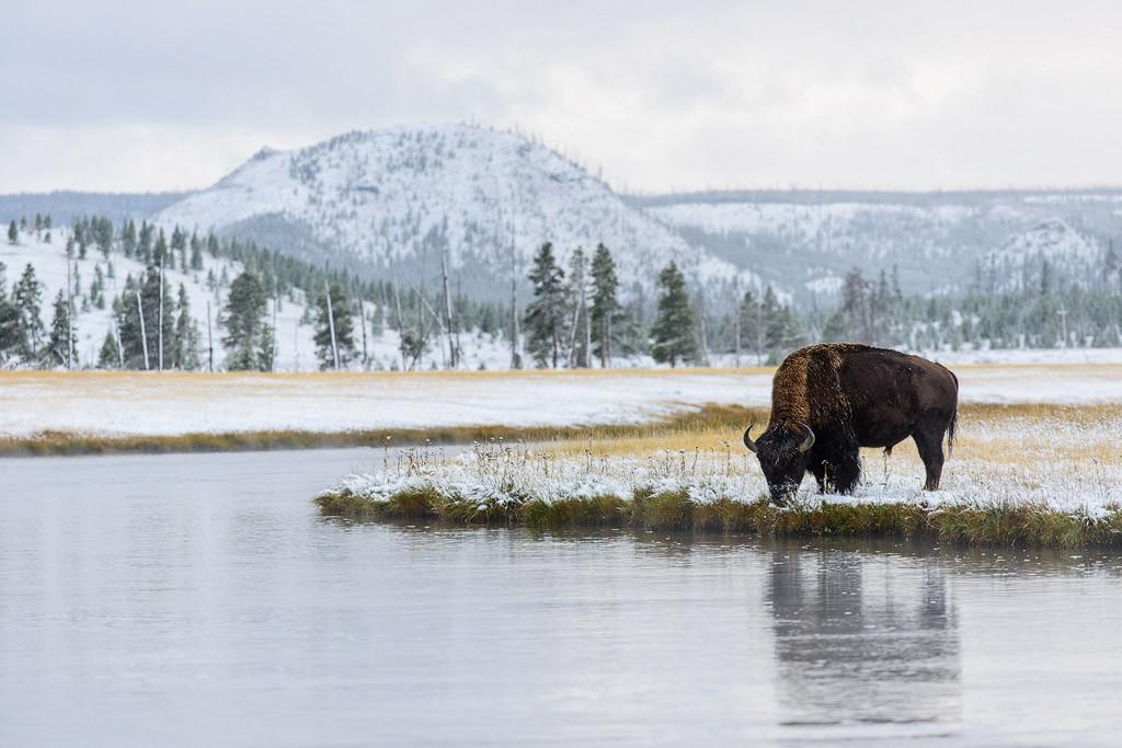 Erfolge Wettbewerb Naturfotografen Schweiz 2011