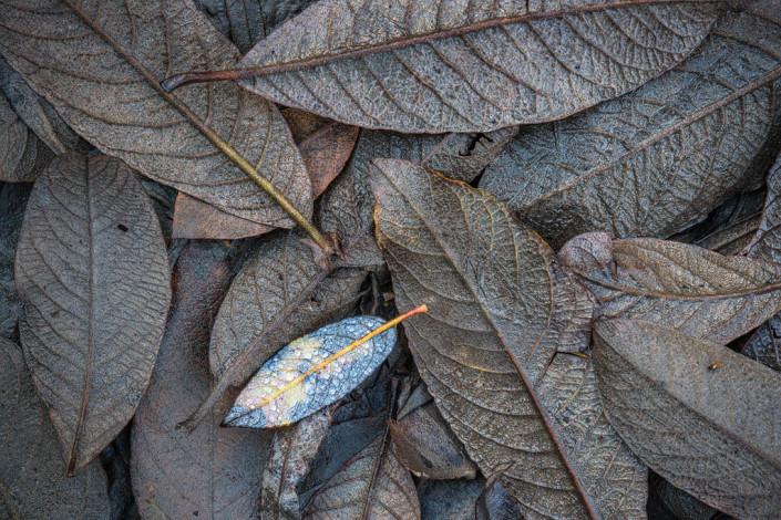 Herbstblätter Detail Brauntöne