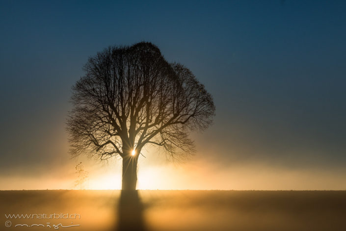 Baum Symbolbild Sonne