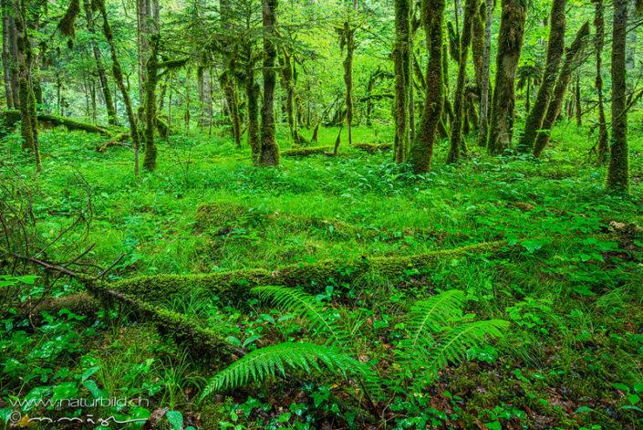 Waadt Aigle Wald