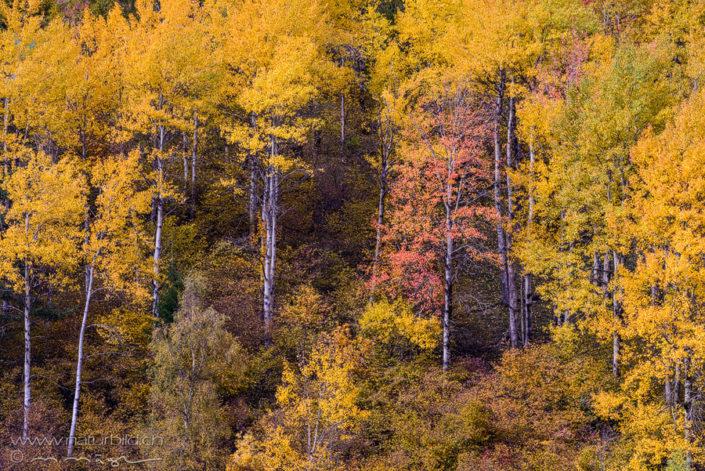 Herbstfarbe Wald farbig