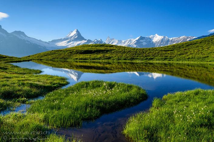 Bachalpsee Grindelwald Berner Oberland