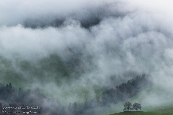 Belchen Baum Nebel