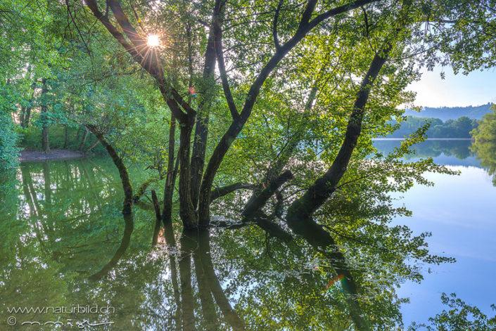 Sonne See Baum