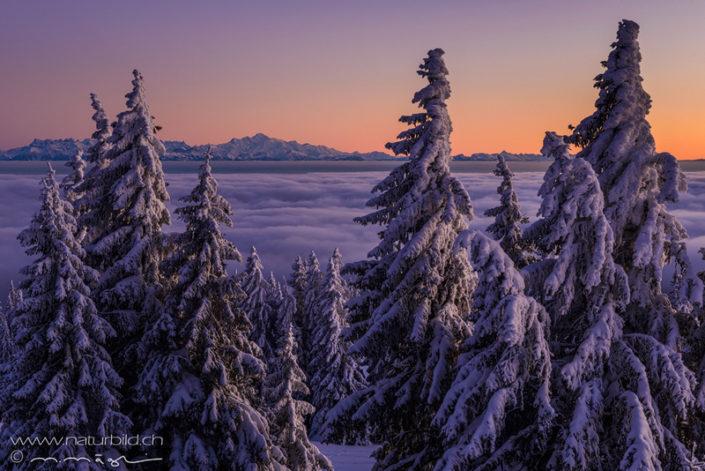 Chasseron Nebelmeer Tannen