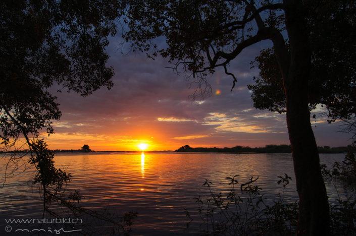 Afrika Chobe Botswana