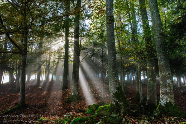 Jura Wald Sonnenstrahlen