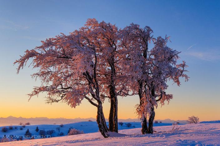 Creux du Van Baum Winter