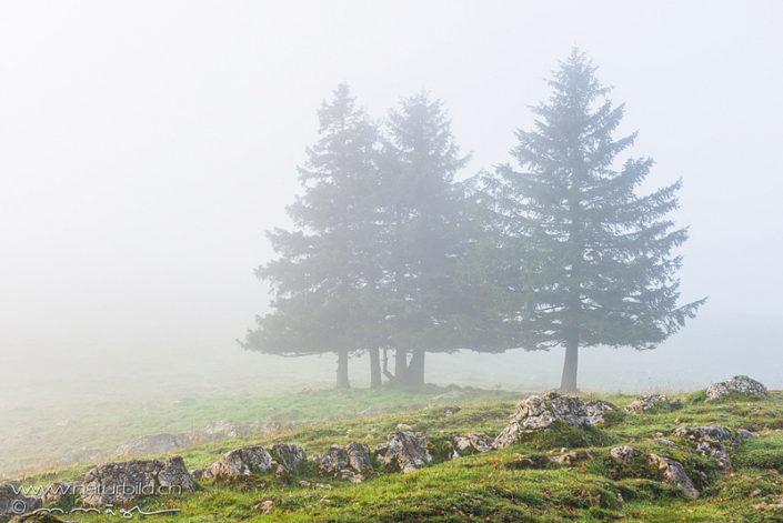 Creux du Van Tannen Nebel