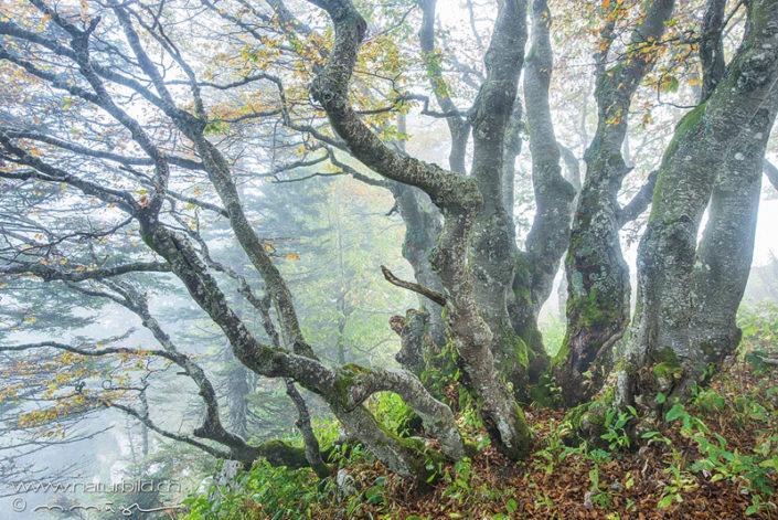 Creux du Van Baum Nebel