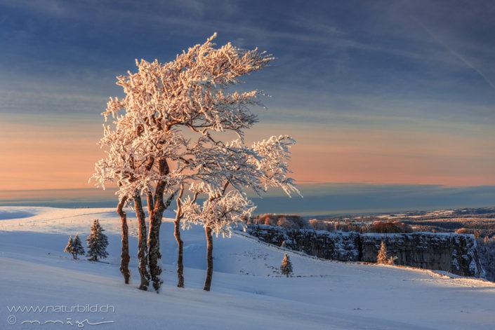 Buche Winter Jurahöhe