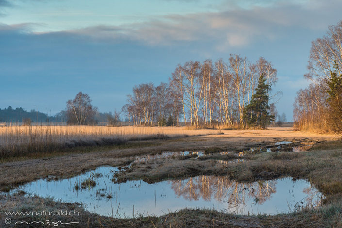 Waadt Cudrefin Moor