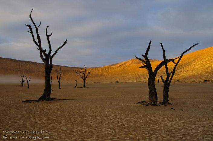Afrika Namibia Deadvlei