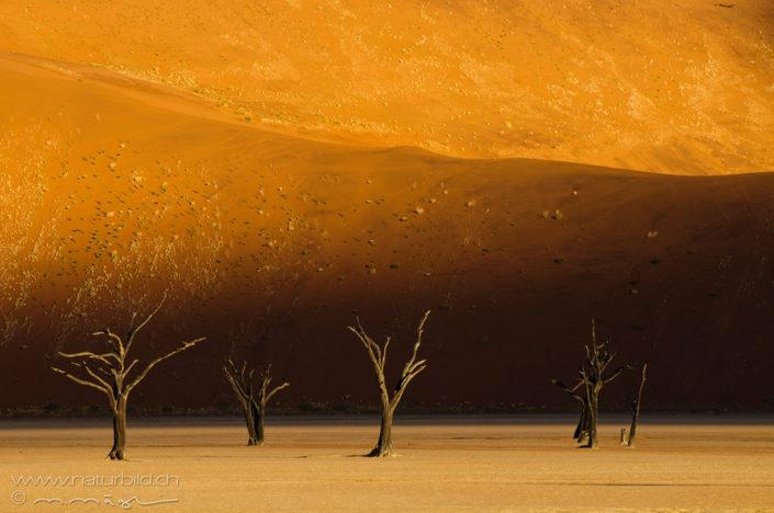 Afrika Deadvlei Wüste
