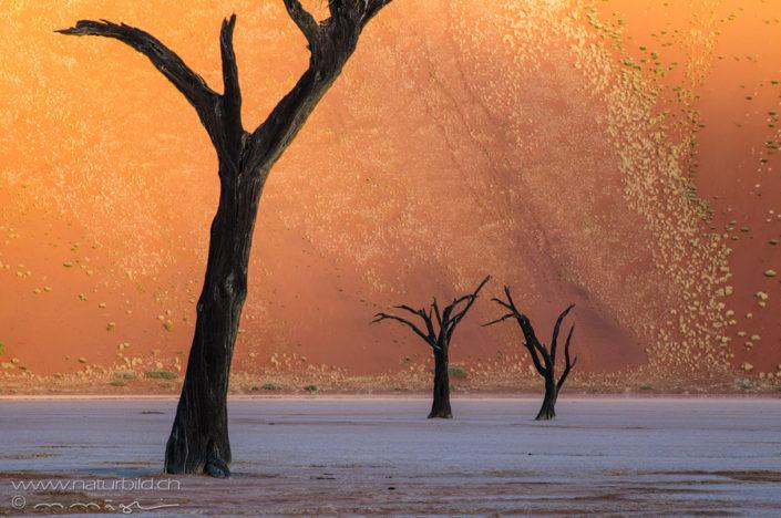 Afrika Deadvlei Bäume