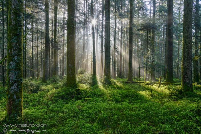 Emmental Wald Sonnenstrahlen