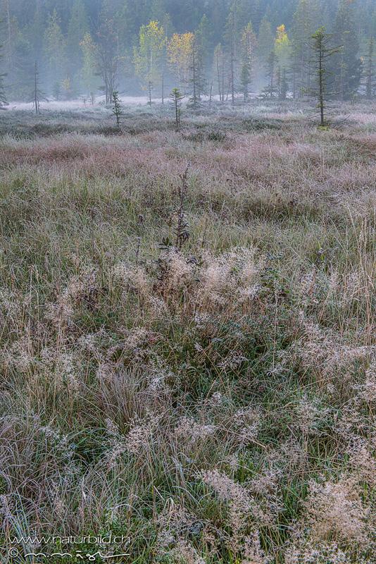Jura Moor Etang