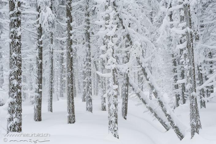 Wal Winter Schnee