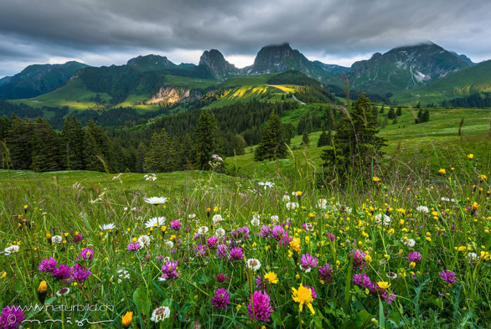 Gurnigel Gantrisch Blumen