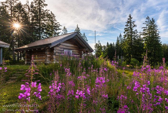 Gantrisch Blockhütte Blumen