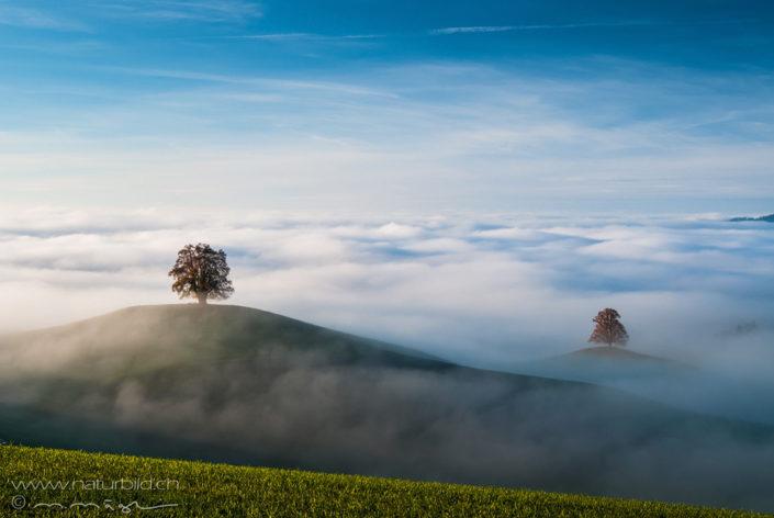 Baum Hügel Nebel