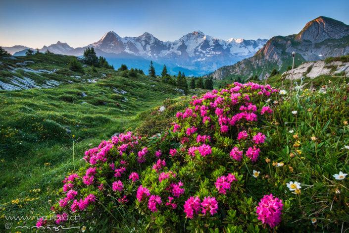 Alpenrosen Eiger Sous