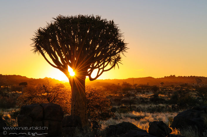Afrika Koecherbaumwald Sonnenuntergang