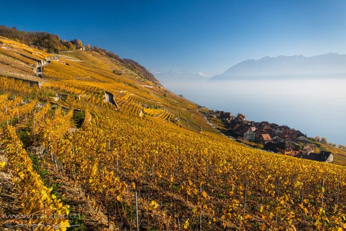 Lavaux Genfersee Herbst