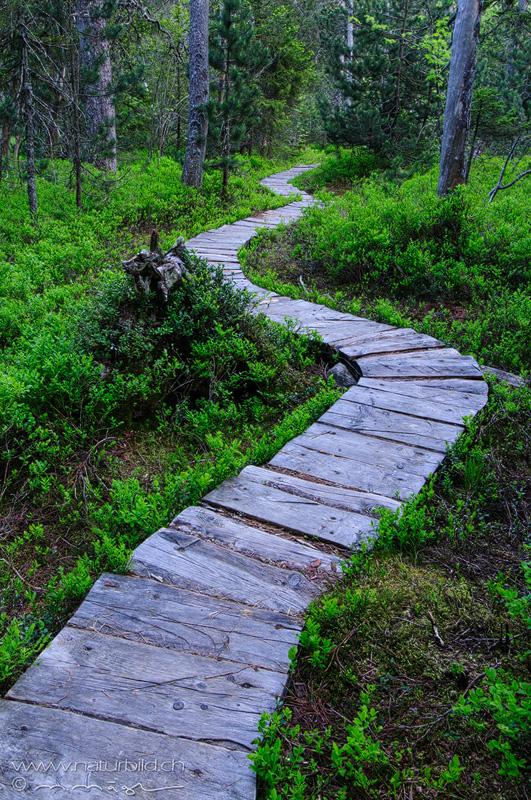 Les Pleiades Waldsteg Weg