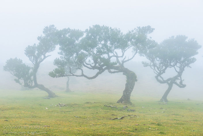 Fanal Nebel Wald