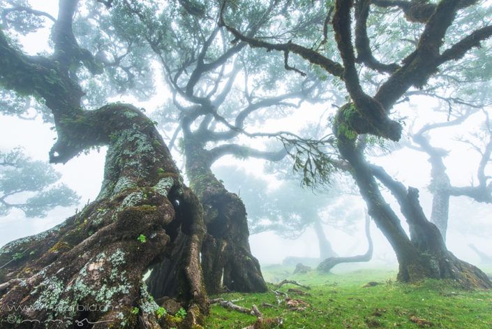 Fanal Nebel Baeume