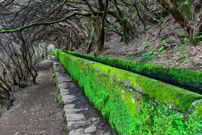 Madeira Wasserkanal Wald