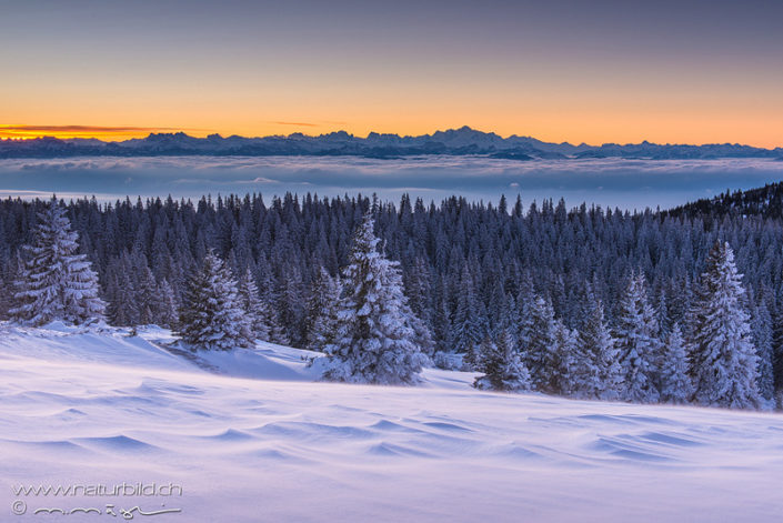 Marchairuz Winter Nebelmeer