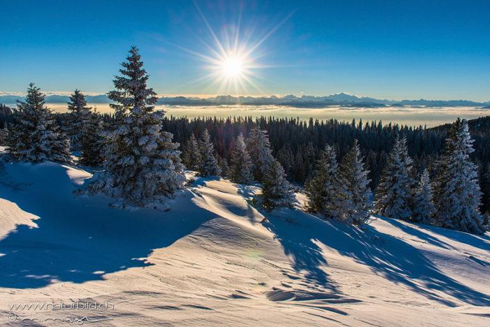 Nebelmeer Tannenwald Marchairuz