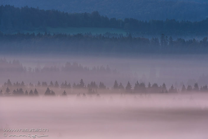 Jura Wald Nebel