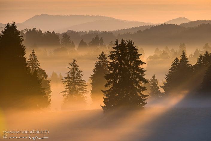 Jura Tannen Nebel