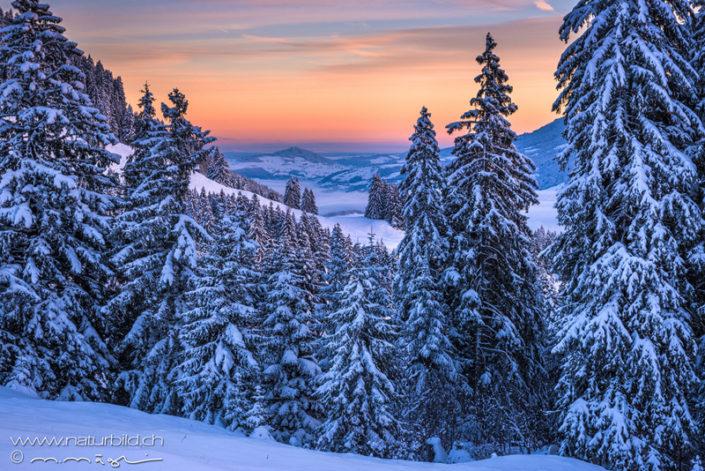Winter Friborg Schnee