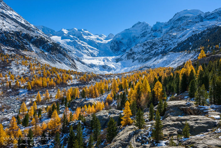 Morteratsch Engadin Herbst