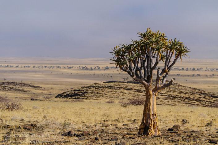 Afrika Namib Naukluft Park Steppe