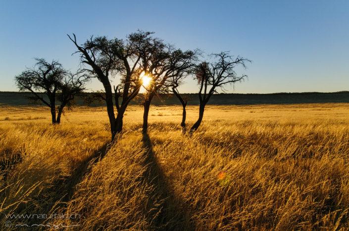 Afrika Namibrand Namibia