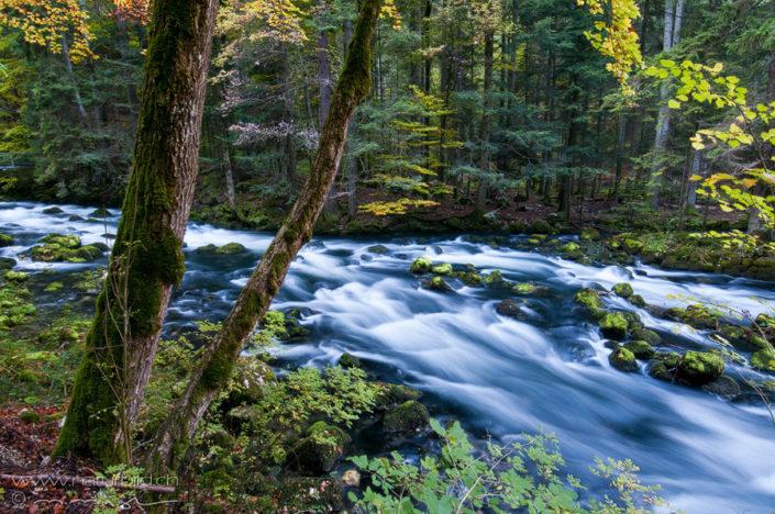 Orbe Waadt Wald