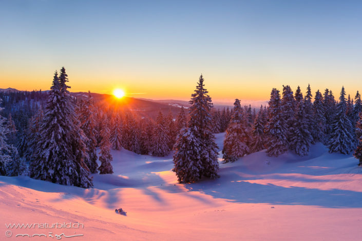 Vallee de Joux Winter Tannenwald