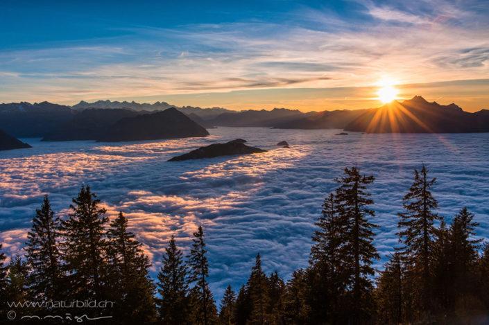 Schwyz Rigi Nebelmeer