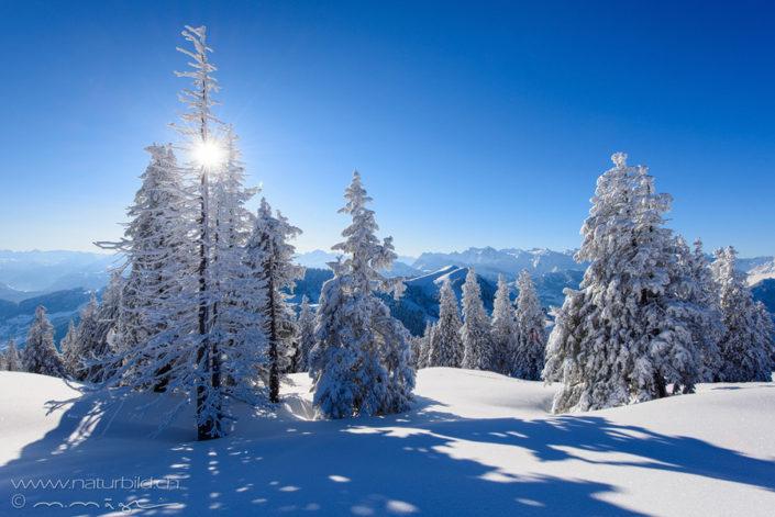 Rigi Winter Zentralschweiz