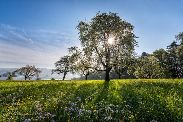 Frühling Luzern Blüte