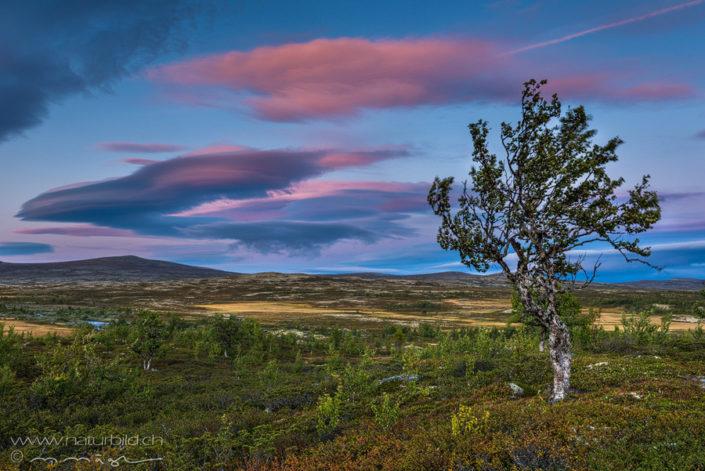 Rondane Norwegen Ebene