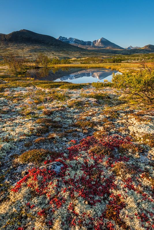 Rondane Skandinavien Moos