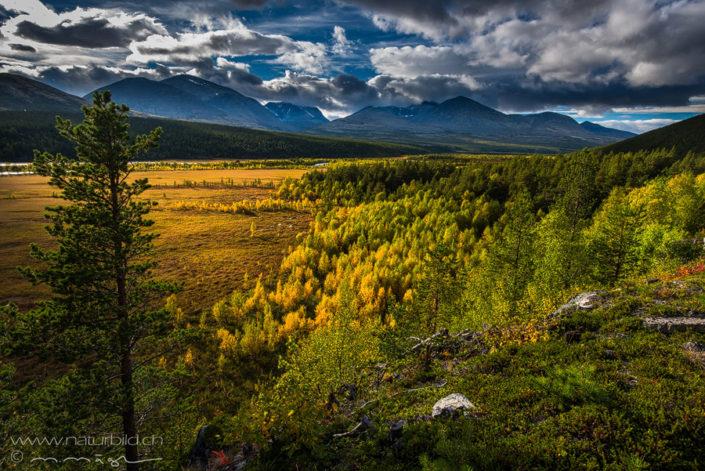 Rondane Ebene Wald