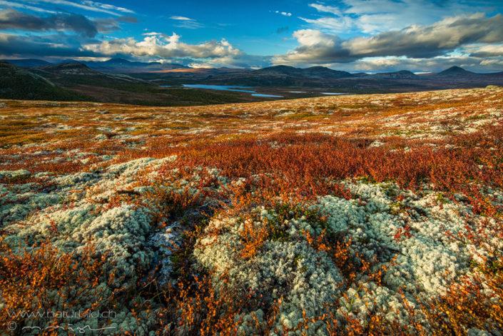 Rondane Bunte Landschaft