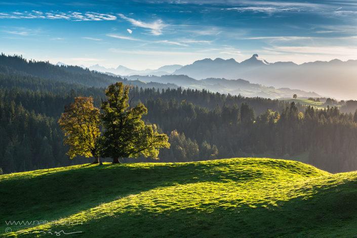 Schallenberg Baum Hügel